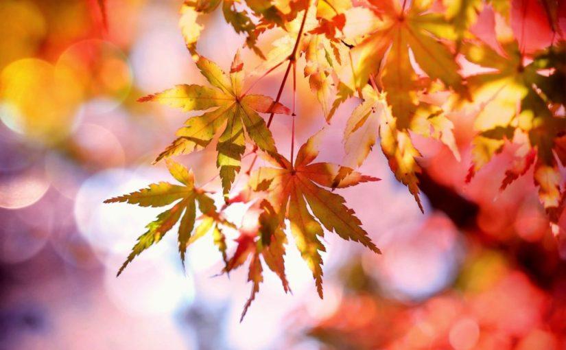 Høsten er kommet på JærYoga